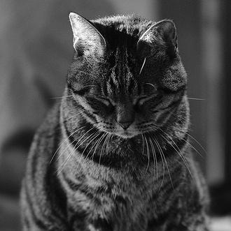 Why Does My Cat Pee on the Floor? - Purrfect Love