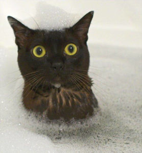 Cat in bathtub