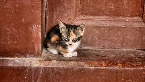 What to Do with a Stray Cat