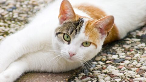Your Energy Affects Your Cat's Health