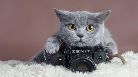 9 Tips for Capturing Great Cat Pictures