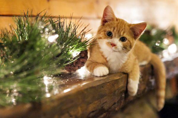 Kitty Christmas