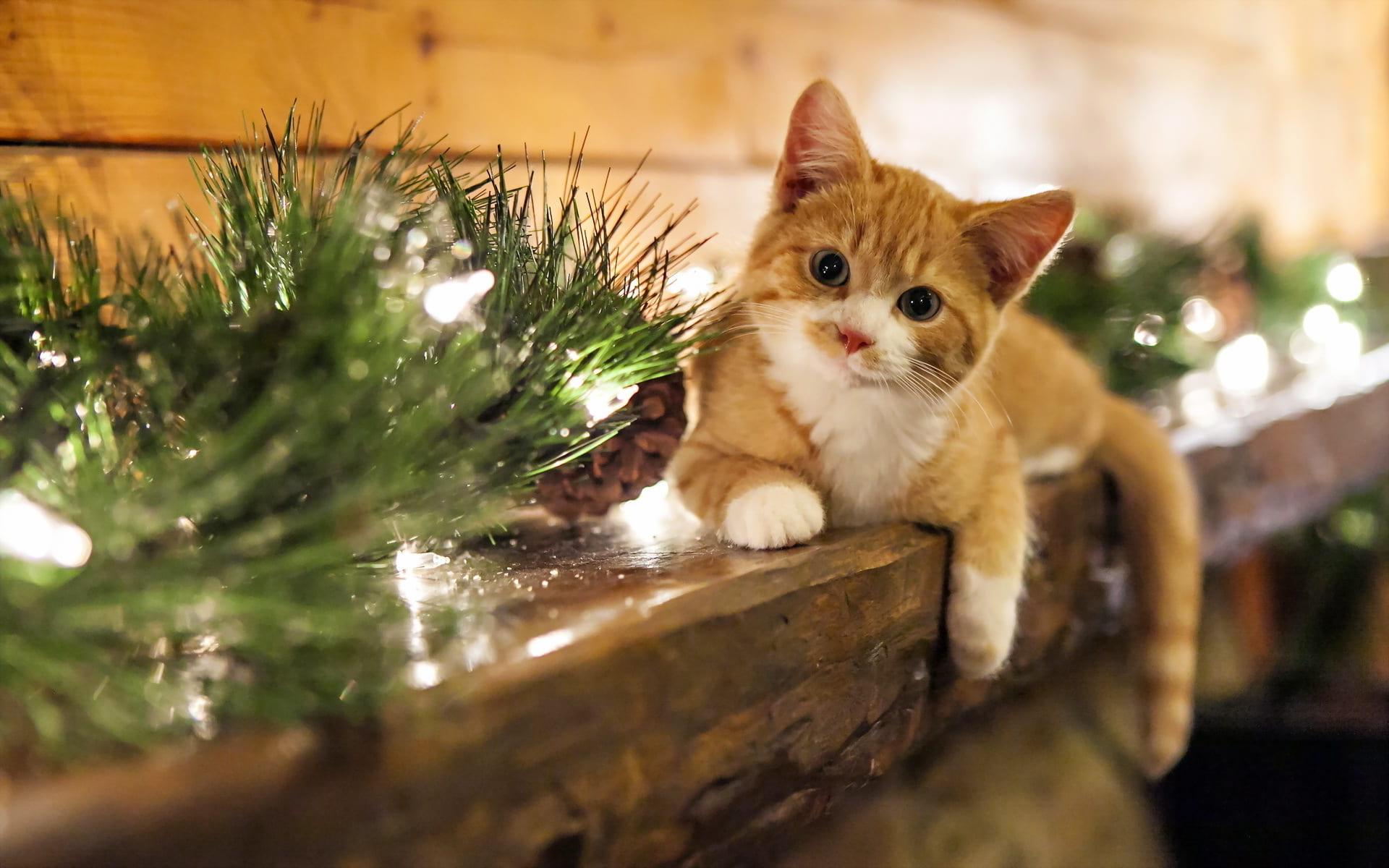 Meowy Catsmas! - Purrfect Love