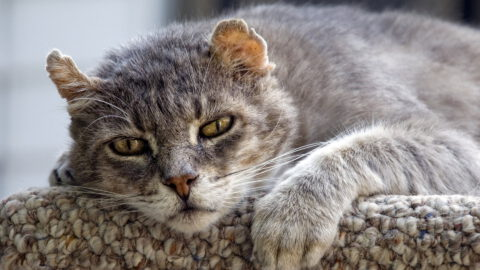 5 Things That Help Older Cats