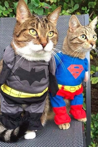 Superhero Cats