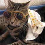 Elvis Cat