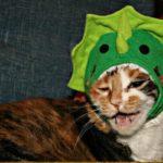 Stegosaurus Cat