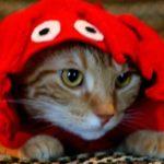 Lobster Cat