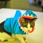 Shark Cat