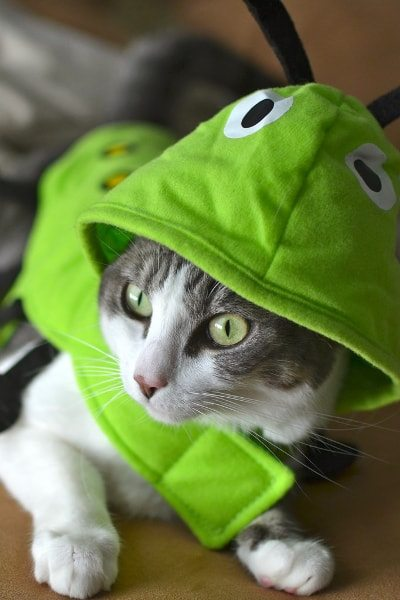 Bug Cat