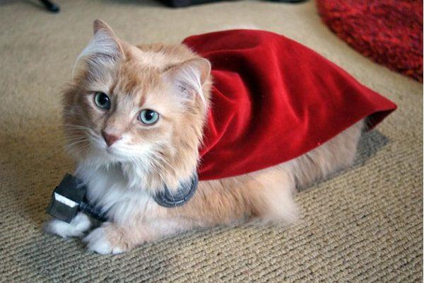 Thor Cat