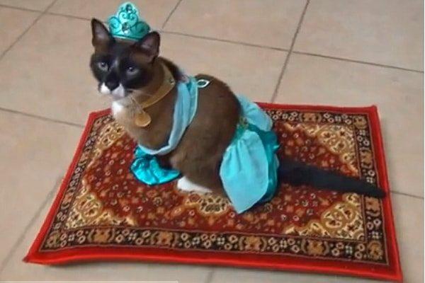 Jasmine Cat
