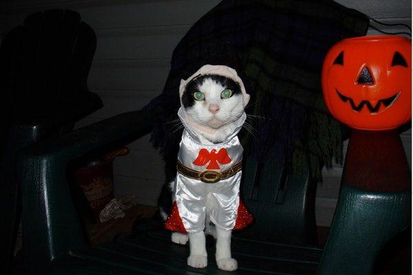 Templar Knight Cat