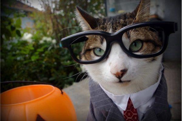 Lawyer Cat