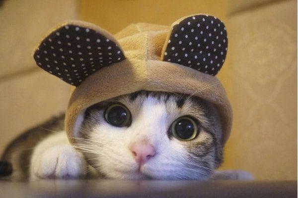 Mouse Cat