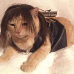 Daryl Cat