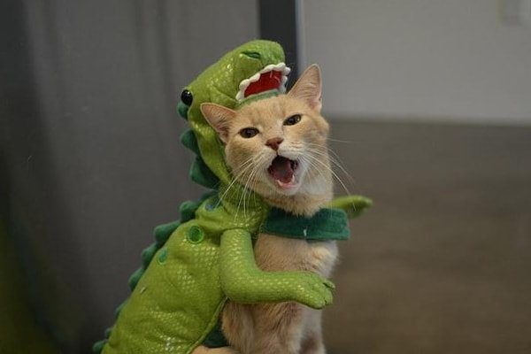 T-Rex Cat