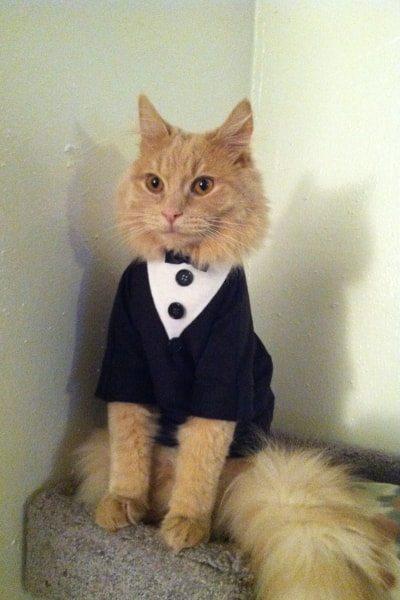 Waiter Cat