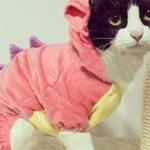 Pink Dinosaur Cat