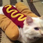 Hotdog Cat
