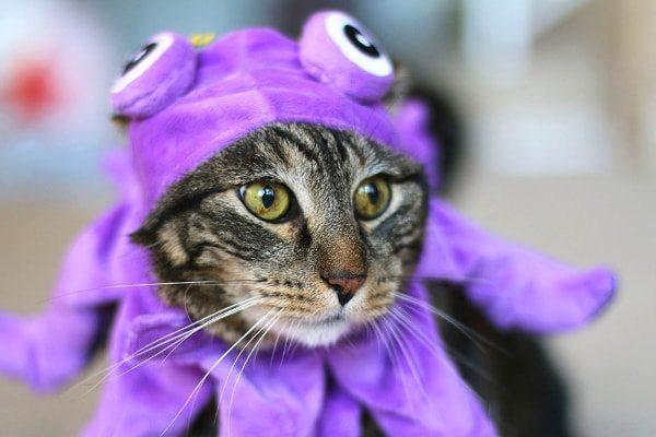 Octopus Cat