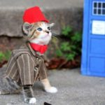 Dr Who Cat