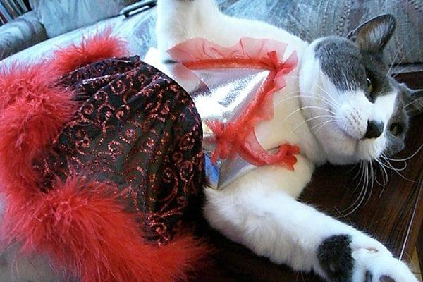 Dancer Cat