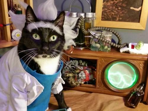 Rick & Morty Cat
