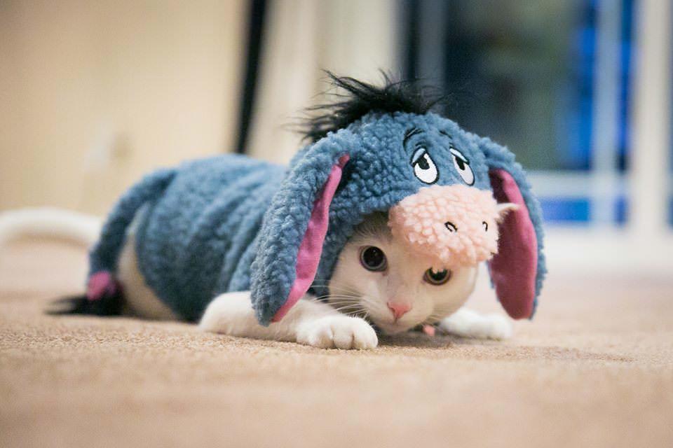 Eeyore cat