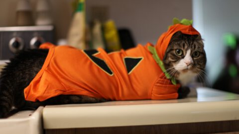 80 Cats in Halloween Costumes