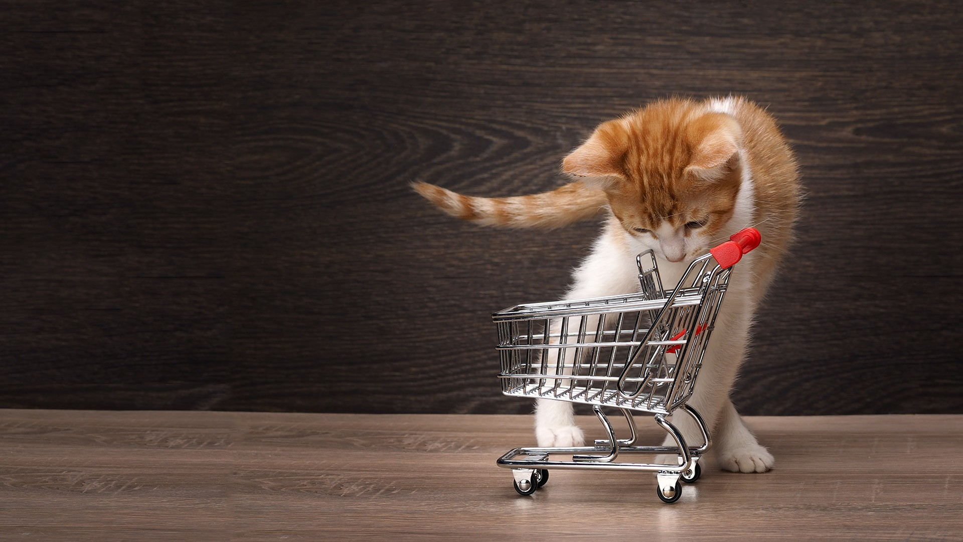 Cat shopping cart