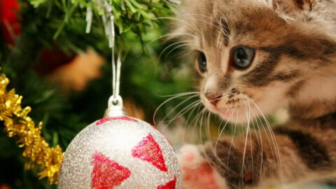 5 Cat-Friendly Christmas Tree Options