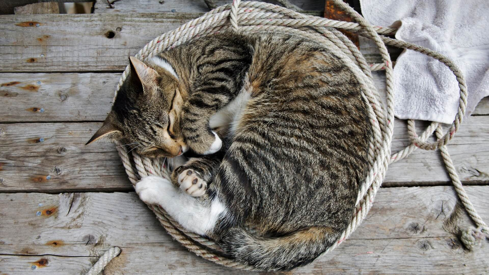 Cat sleeping with rope
