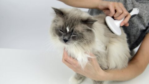 Catit Grooming Kit Review