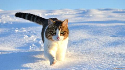 Cat Trails Are Unique
