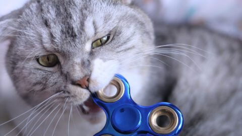 Fidget Spinners for Cats!