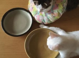 Cats Waiting To Eat