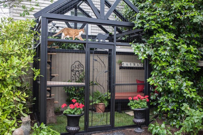 Fancy Black Catio
