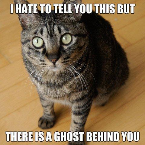 Ghost Cat Meme cat memes purrfect love