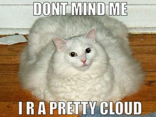 cat memes purrfect love