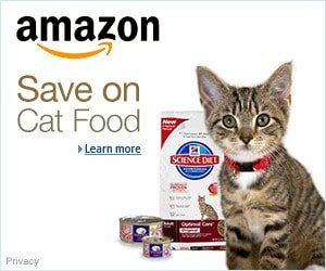 Cheap Cat Food on Amazon