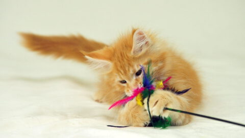 Budget-Friendly Cat Toys