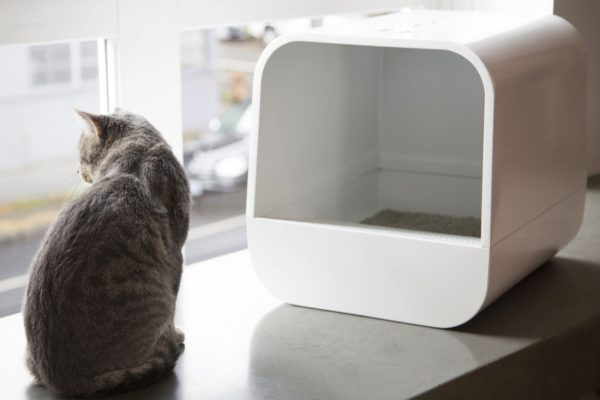 Top 5 Cat Litter Boxes