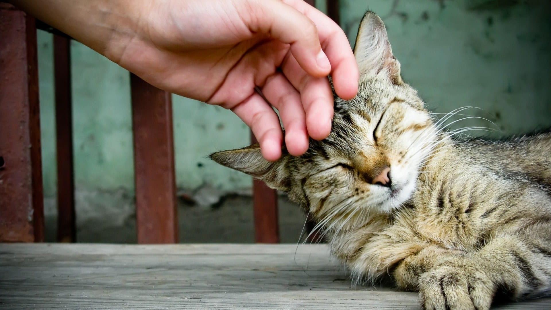 Cat Purr