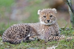 wild kitteh