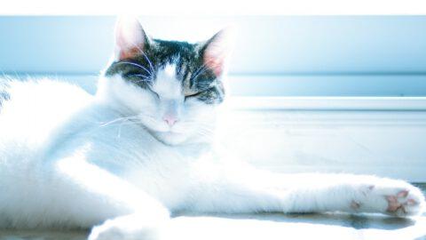 Outdoor Cat Enclosure Options