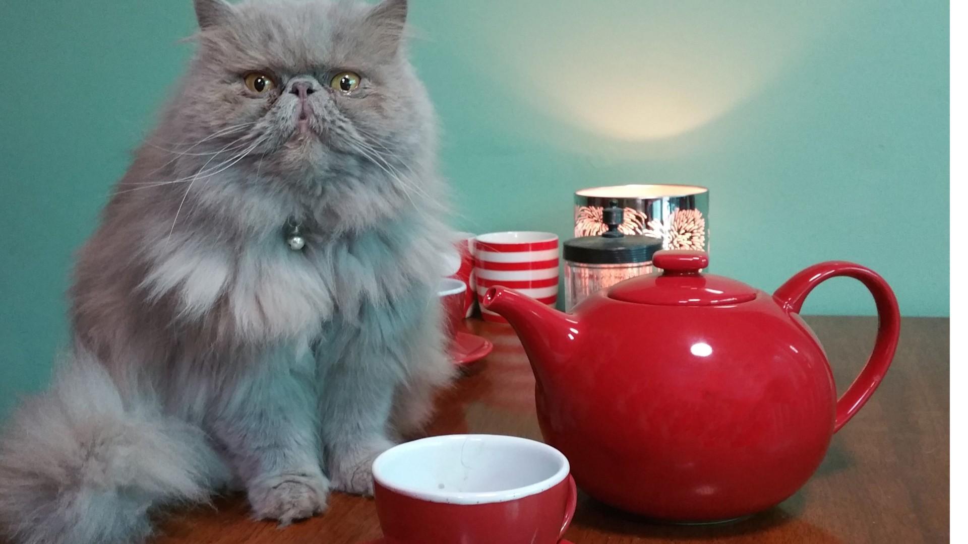 Green Tea Benefits for Cats