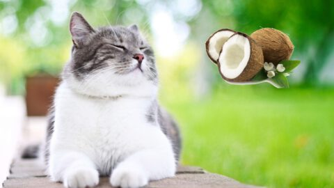 Coconut Oil Benefits for Cats