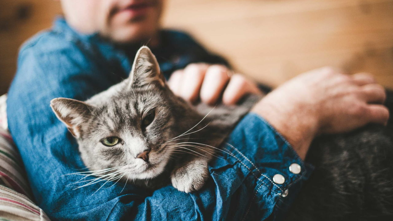 Spinal Strokes (FCE) in Cats