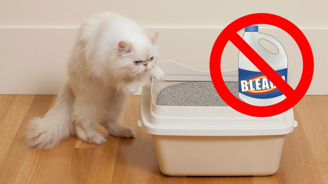 Bleach Is Harmful to Cats